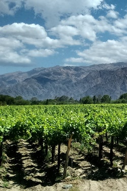 Exclusive: Argentina Food & Wine Tour