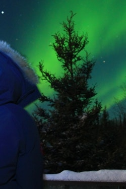 Gaze at the Northern Lights in Yellowknife