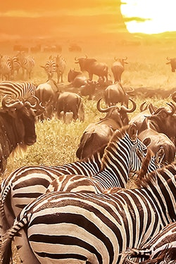 Save $650CAD Per Couple on Select 2022 Globus Africa Vacations