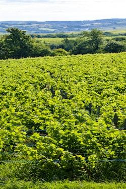 Taste the Wines of Burgundy