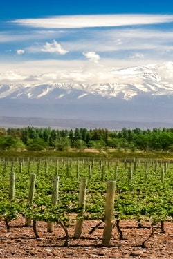 Experience Wine Country in South America