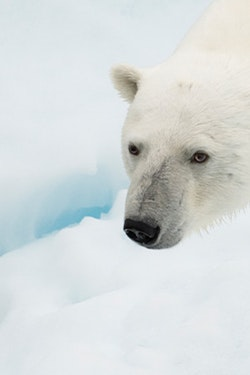 Save 15% on an Epic Canadian High Arctic Adventure