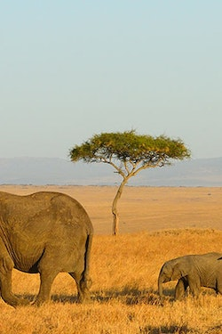 Save $150 Per Couple On a 2022 Kenya Safari