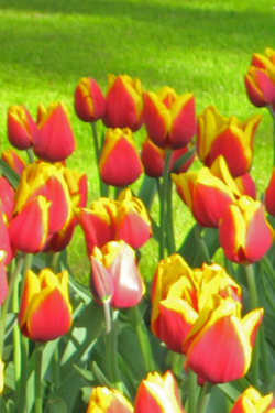 Book, Save & Experience Netherlands, Belgium & France Featuring Floriade Expo